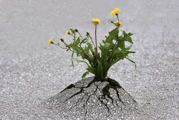 Ark_Weeds Through Pavement